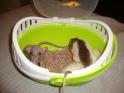 [HABITAT] Comment transporter ses rats Dsc01718