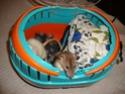 [HABITAT] Comment transporter ses rats Dsc01712