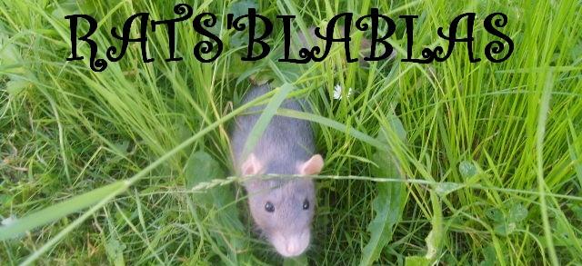 Forum Rats' Blablas!