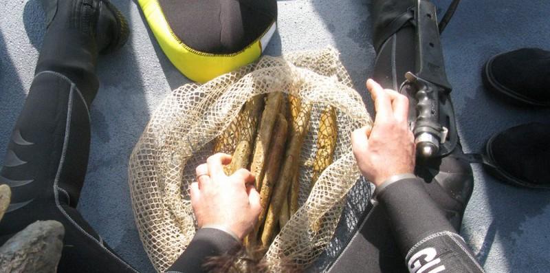Des lingots d'orichalque découverts à Gela, Sicile Lingot10