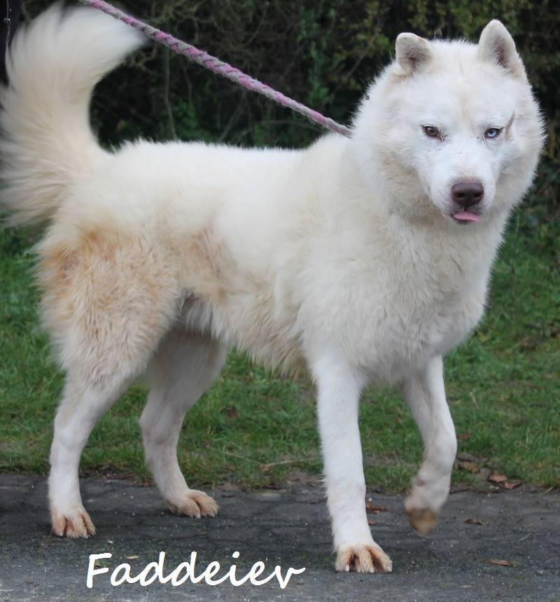 Faddeiev, Husky blanc yeux verron,ok chiens pas de chats REFU28 ADOPTE 10410310