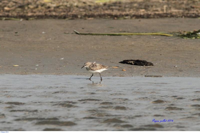Seul sur le sable, les pieds dans l'eau...(Tanné de l'hiver) Papou_44