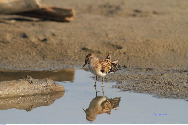 Seul sur le sable, les pieds dans l'eau...(Tanné de l'hiver) Papou_45