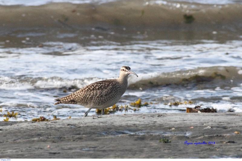 Seul sur le sable, les pieds dans l'eau...(Tanné de l'hiver) Papou_47