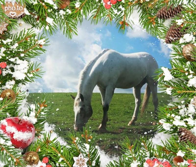 Nos dadous fêtent Noël L_php10