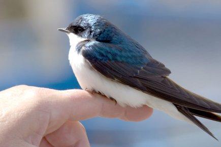 Un site sur les oiseaux... 51847610