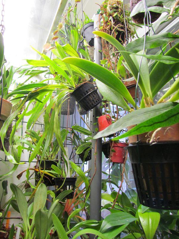 Abaisser la température ou augmenter le taux d'hygrométrie Img_3151