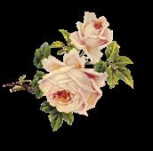 """""""La Belle et la Bête"""" wünscht einen schönen Frühling Rose_010"""