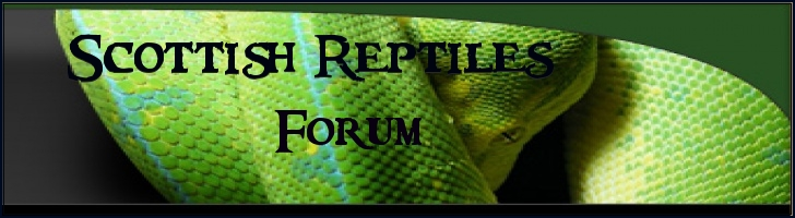 scottish reptiles forum
