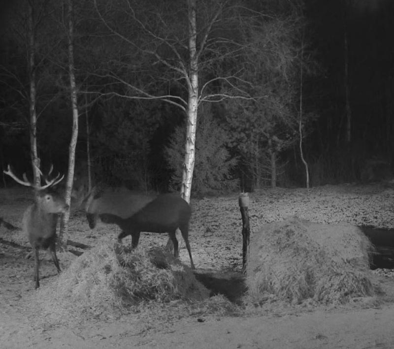 Red Deer Cam (Saarema Island)  - Page 18 2015-014