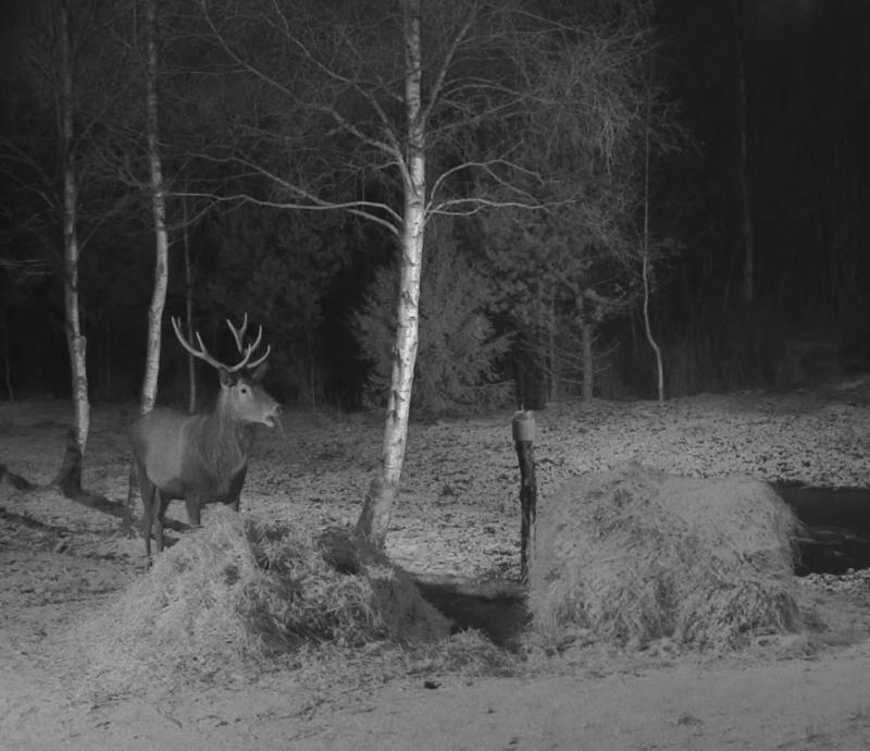 Red Deer Cam (Saarema Island)  - Page 18 2015-015