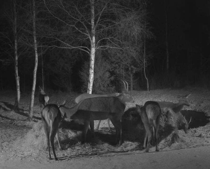 Red Deer Cam (Saarema Island)  - Page 18 2015-016
