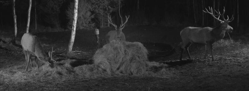 Red Deer Cam (Saarema Island)  - Page 18 2015-032