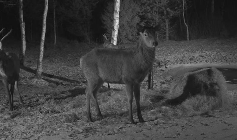 Red Deer Cam (Saarema Island)  - Page 18 2015-044