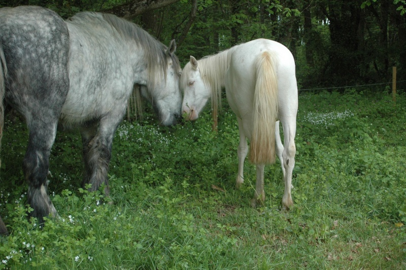 cheval - Une vie à 2 apporte t-elle l'équilibre nécessaire au cheval? Dsc_6010