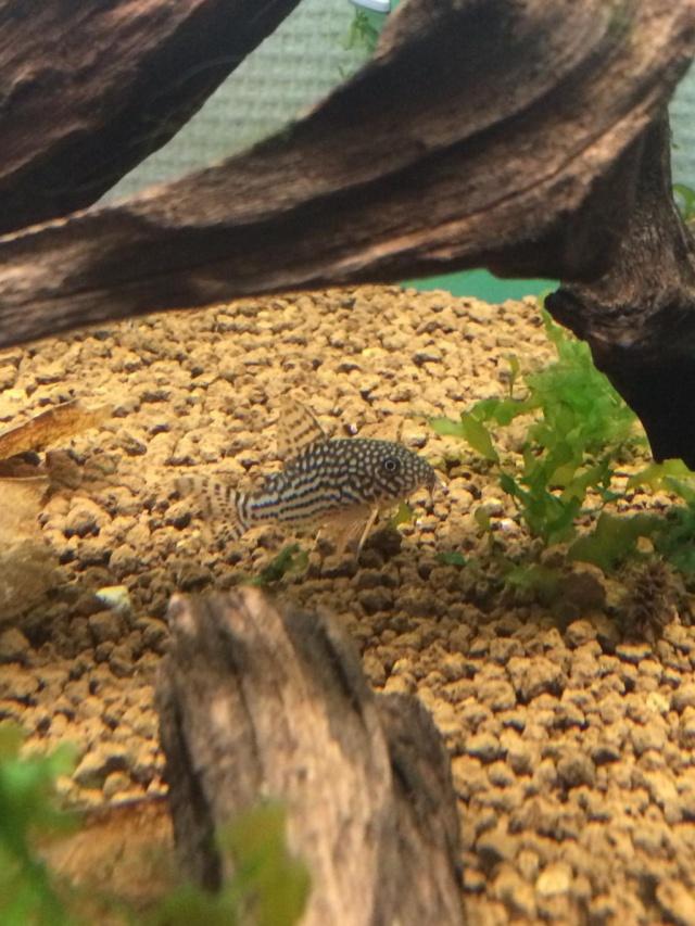 ma fish/reptilroom 3be9f910