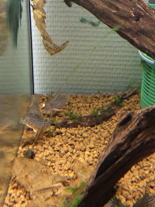 ma fish/reptilroom 6085a810