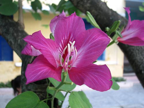 Thế giới các loài hoa Caymon11