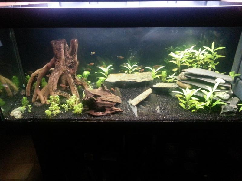 choix de rampe/  algues 20141010