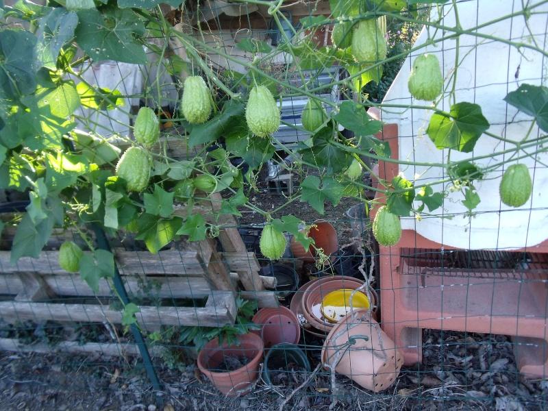 Les fruits d'automne Dscf1014