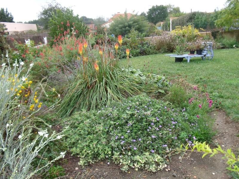 Encore quelques fleurs au jardin Dscf1015