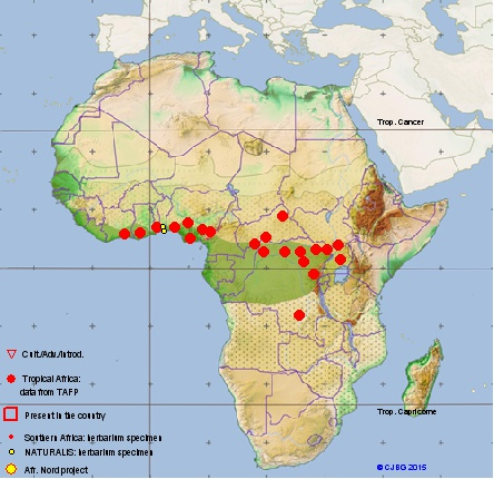 Culture ethnobotanique en France : Kolatier - Noix de Cola nitida, acuminata et gigantea. 12096210