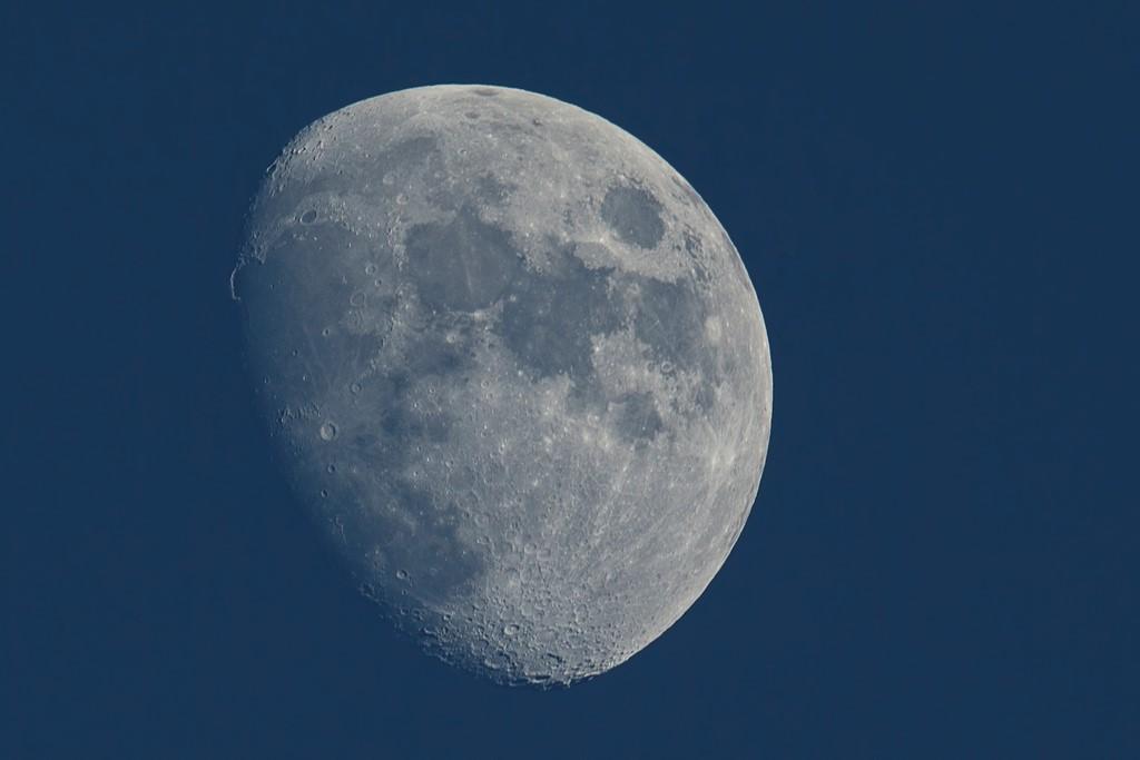 Colverts, le froid et + ... Lune_110