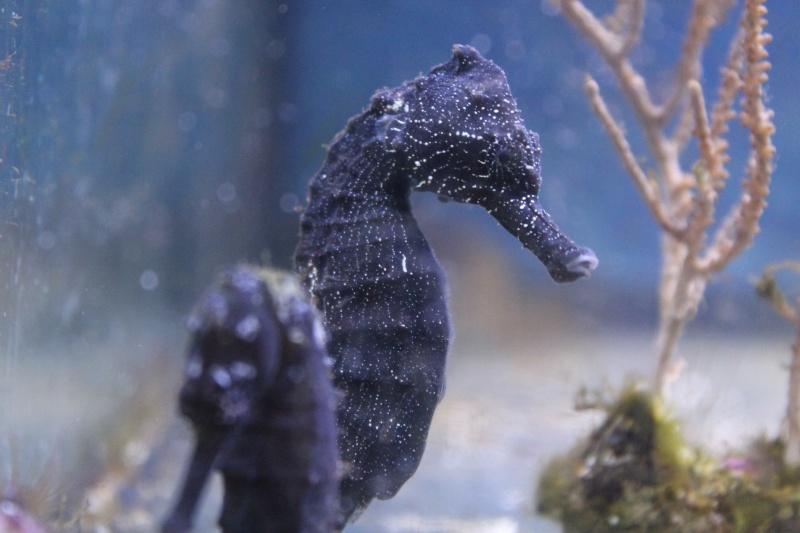 Mon paradis (bac hippocampes) et mon coin de récif Img_8811