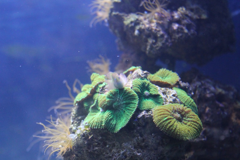 Mon paradis (bac hippocampes) et mon coin de récif Img_8812