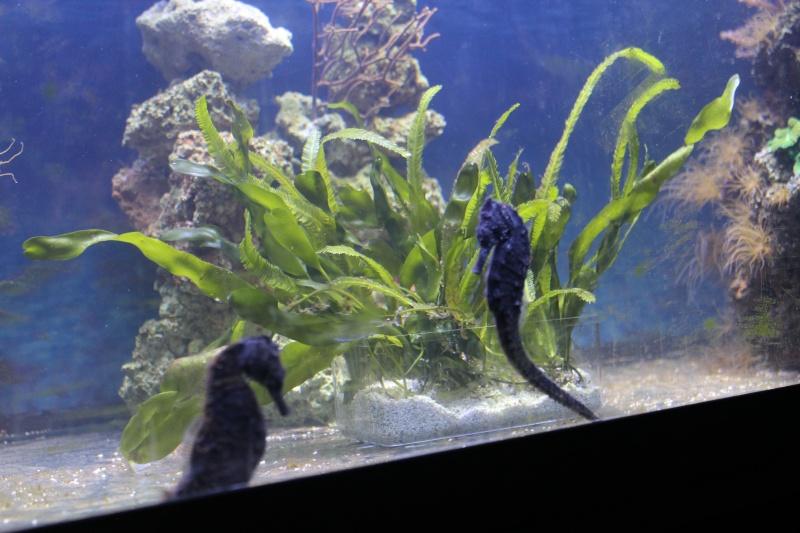 Mon paradis (bac hippocampes) et mon coin de récif Img_8813