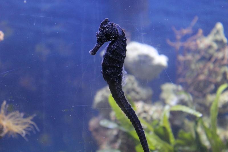 Mon paradis (bac hippocampes) et mon coin de récif Img_8814