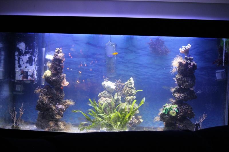 Mon paradis (bac hippocampes) et mon coin de récif Img_8820