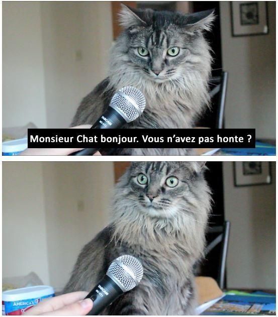 un chat imite marine le pen B7e35910