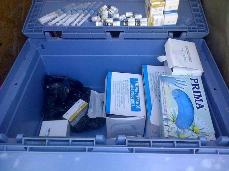 Appel aux dons : 1200€ nécessaires pour a campagne de vaccination des chiens en fourrière 10384911