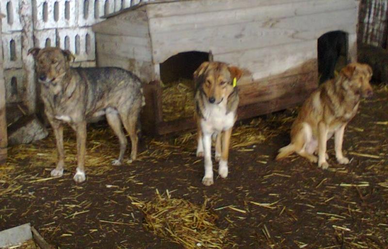 ** HEIWA ** + 5 ANS DE BOX - femelle croisée de taille moyenne, craintive, née environ début juin 2011 - adoptée par Brigitte (91)  10906410