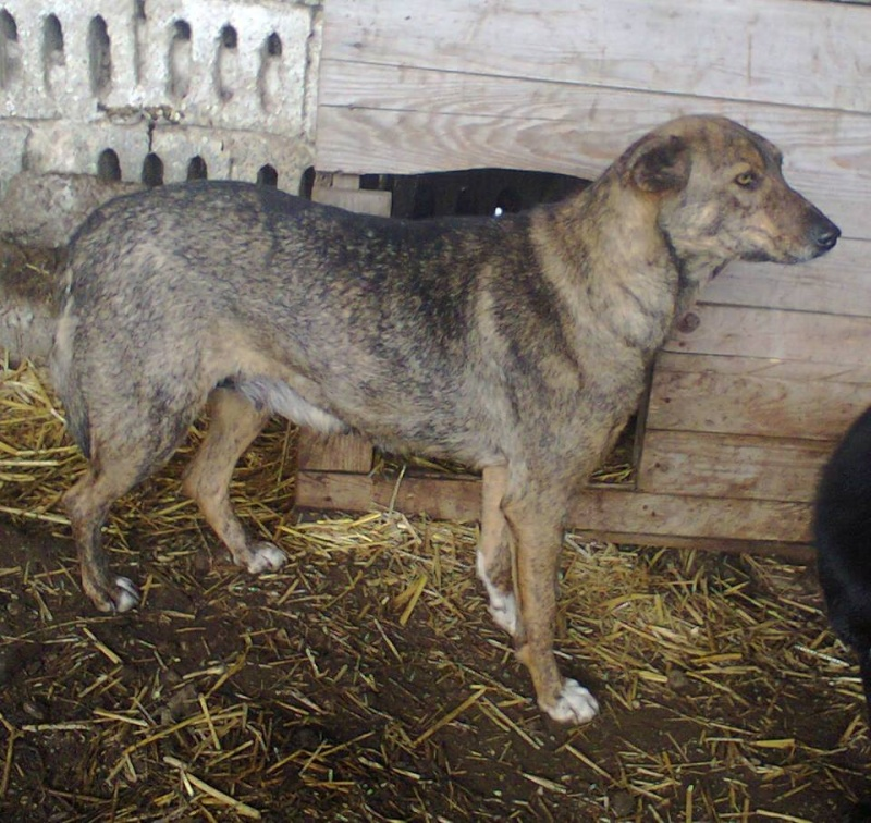 ** HEIWA ** + 5 ANS DE BOX - femelle croisée de taille moyenne, craintive, née environ début juin 2011 - adoptée par Brigitte (91)  10917412