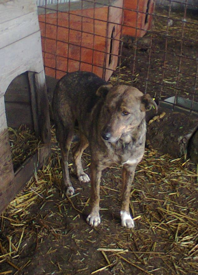** HEIWA ** + 5 ANS DE BOX - femelle croisée de taille moyenne, craintive, née environ début juin 2011 - adoptée par Brigitte (91)  10931410