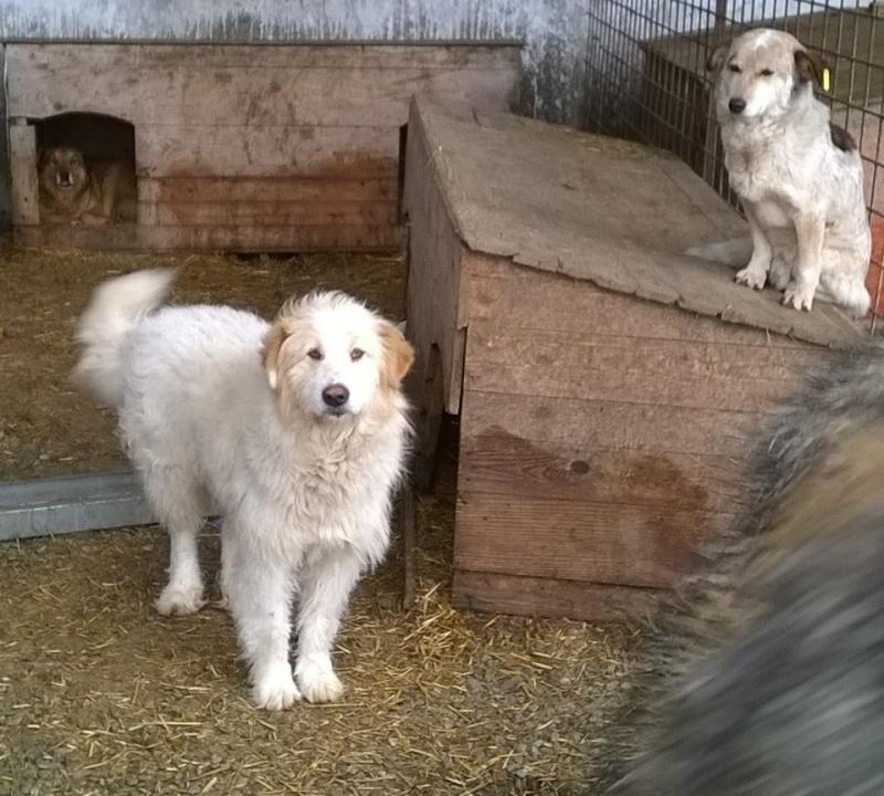 FLASH, mâle, croisé, taille moyenne à grande (Pascani) - adopté par emi et joee (Belgique) 10993010
