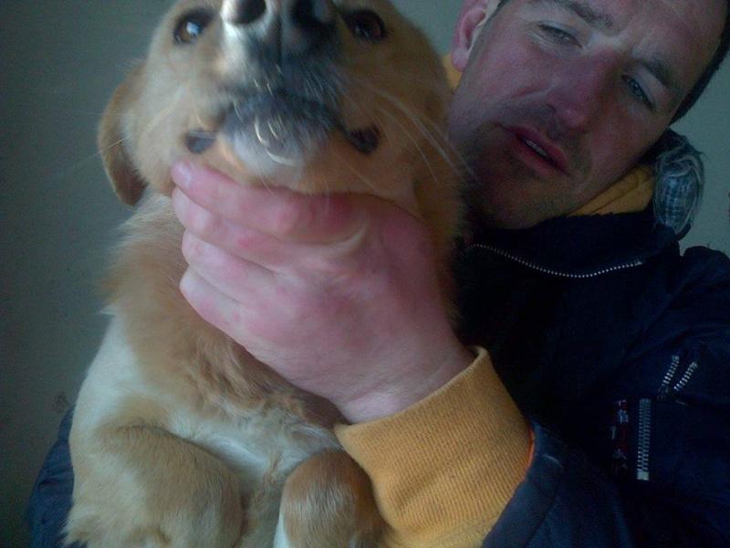 Appel aux dons : 1200€ nécessaires pour a campagne de vaccination des chiens en fourrière 14596511