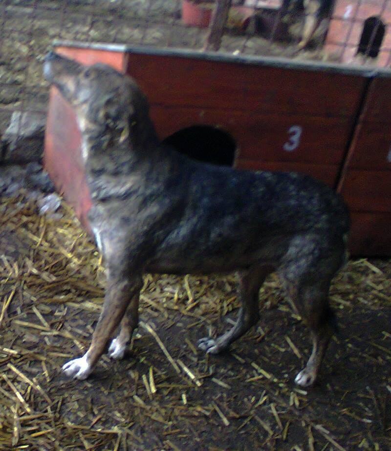 ** HEIWA ** + 5 ANS DE BOX - femelle croisée de taille moyenne, craintive, née environ début juin 2011 - adoptée par Brigitte (91)  16192510