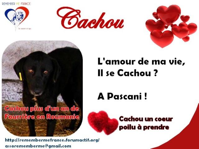 Un petit concours Cachou11