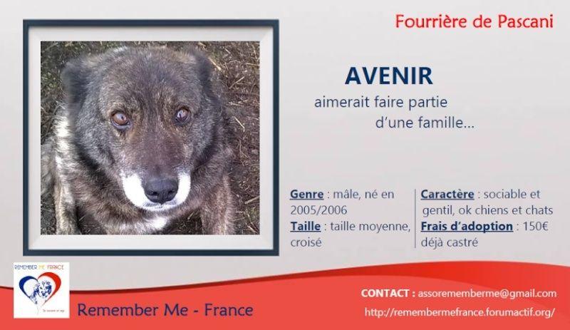 AVENIR - mâle senior taille moyenne (PASCANI) - réservé adoption par Alain (dpt 80) Unname21
