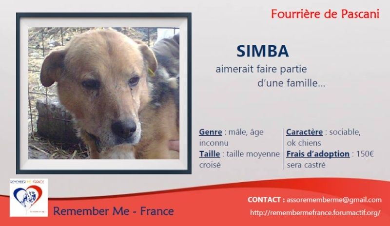 SIMBA, mâle âgé croisé berger taille moyenne né env 2005 (PASCANI)-En fourrière Unname26