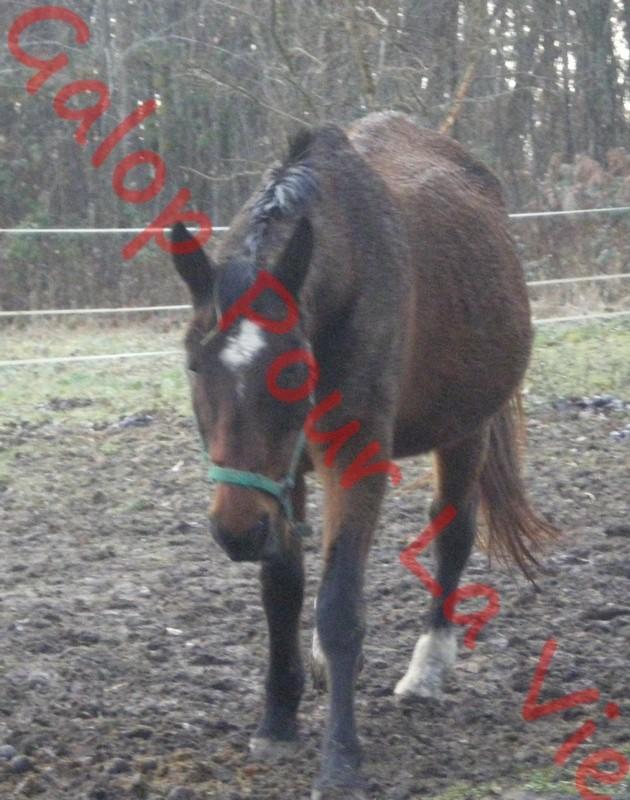 FIGLIANA - TF née en 1993 - adoptée en juin 2011 Figgi10