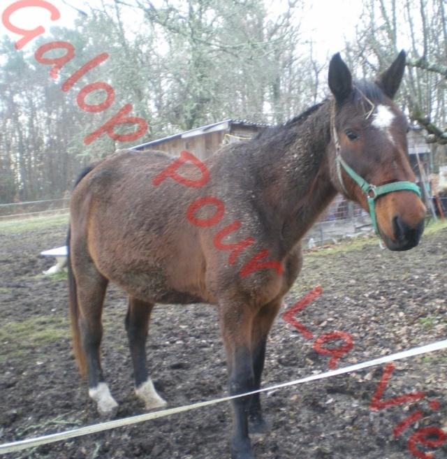 FIGLIANA - TF née en 1993 - adoptée en juin 2011 Figgi210