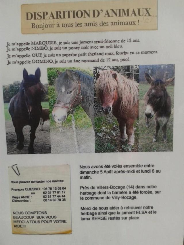 STOLEN  Horses and Ponies Dept 61 & dept 14 41892310