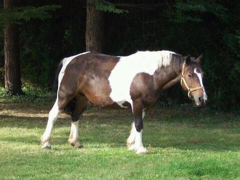 STOLEN  Horses and Ponies Dept 61 & dept 14 55091110
