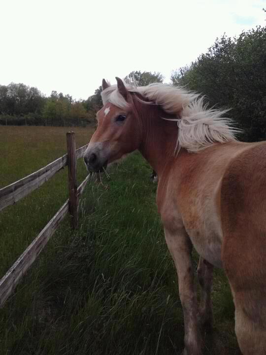 STOLEN  Horses and Ponies Dept 61 & dept 14 55759210