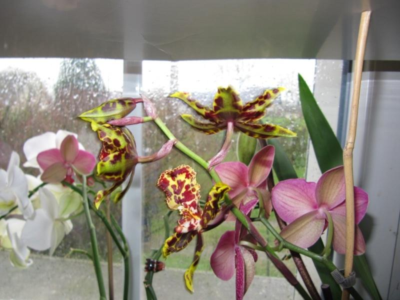"""une orchidée """"sans nom """" 00910"""