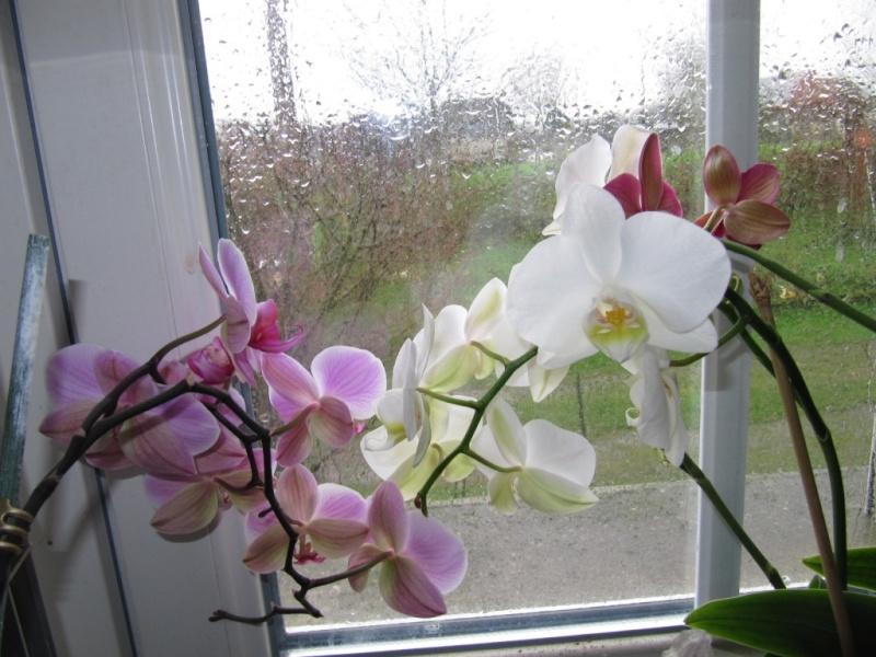 mes floraisons du moment  01310